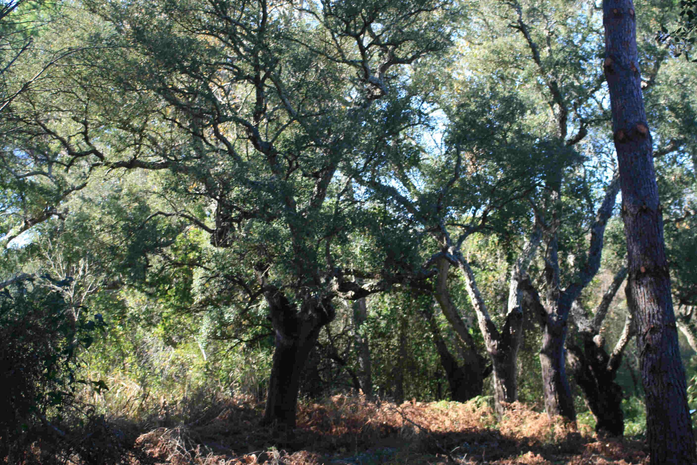 paisaje con árboles
